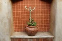 wowwwie those cacti